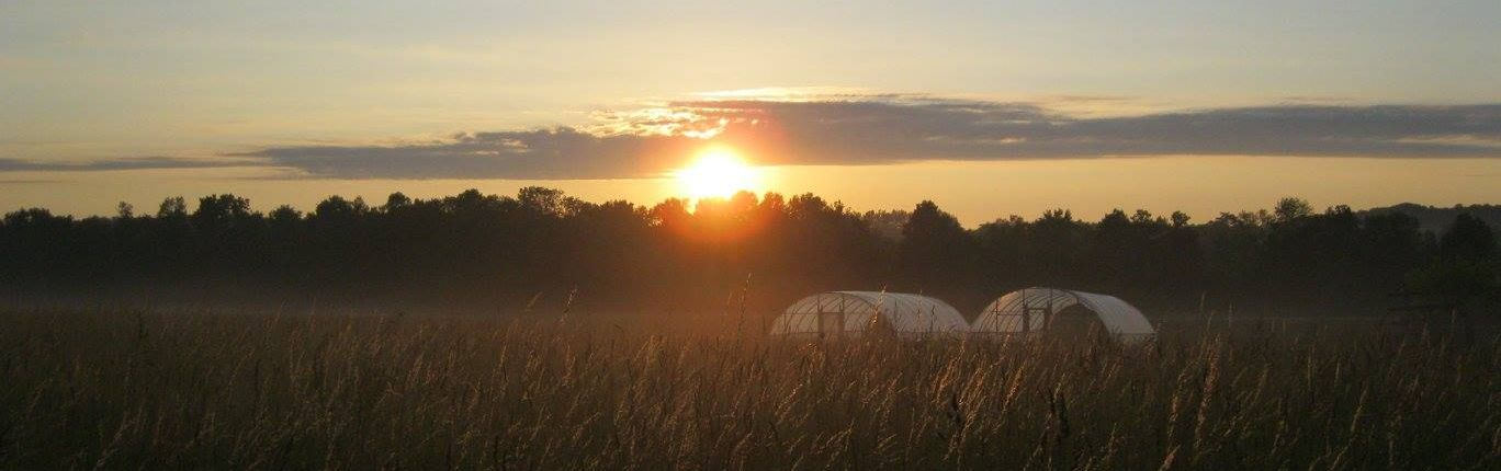 Sunrise with hoop houses